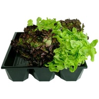 3 CHANNEL HYDROPONICS TUB 415X403X95